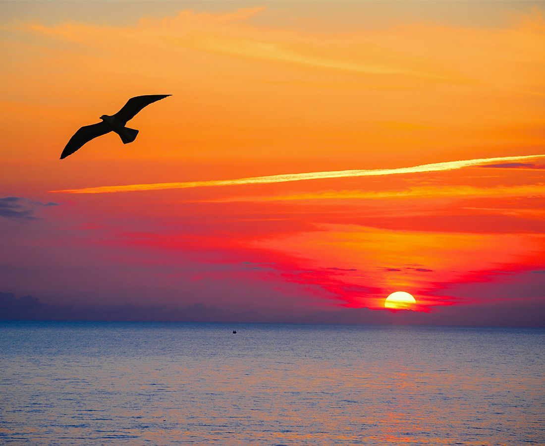 Seagull flying on an idyllic sunset on resort Isola Rossa